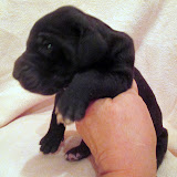 Available black female #3 @ 2 weeks