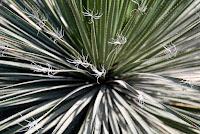 CactusFlowerF_3123.jpg