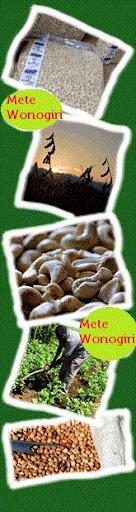 kacang mete wonogiri