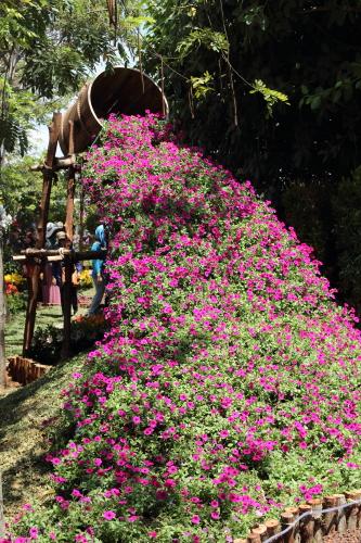 curahan bunga