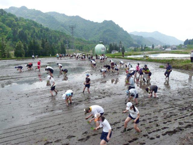 足立区農業体験 魚沼