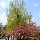 2014 Japan - Dag 11 - tom-SAM_0587-0009.JPG