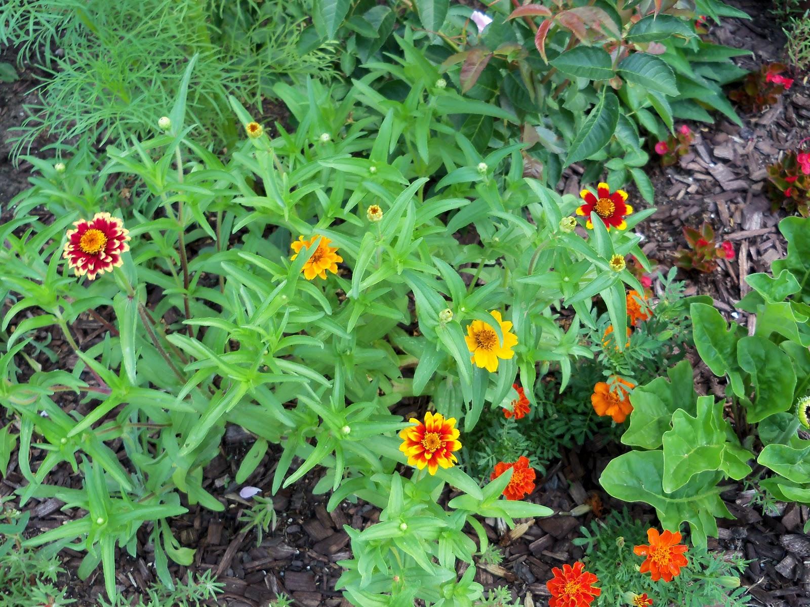Gardening 2010, Part Two - 101_2562.JPG