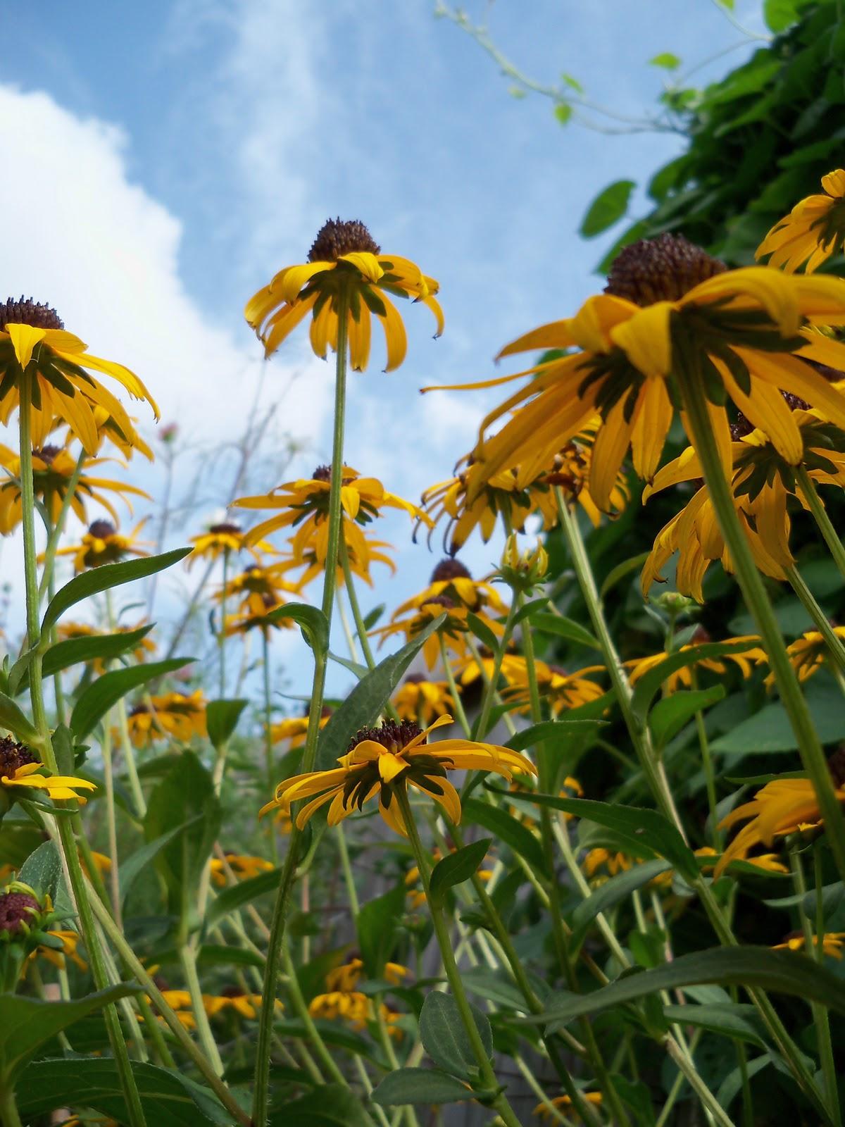 Gardening 2010, Part Three - 101_5238.JPG