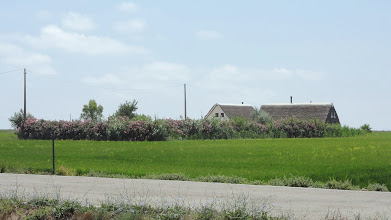 Photo: Thatched farmhouse, surrounded by oleander bushes