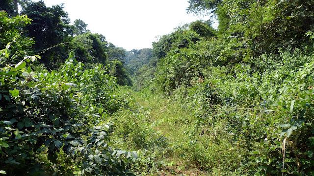 Piste abandonnée dans le Parc National de Bia (Ghana), 12 décembre 2013. Photo : J.-F. Christensen