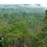 La forêt primaire autour de Cristalino Jungle Lodge