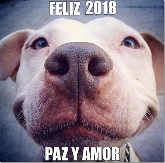 2018 perro