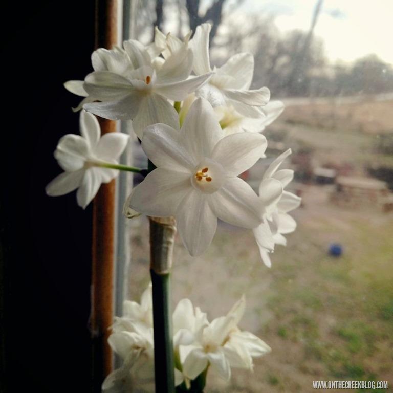[flower%5B10%5D]