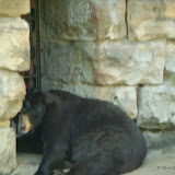 Pittsburgh Zoo Revisited - DSC05199.JPG