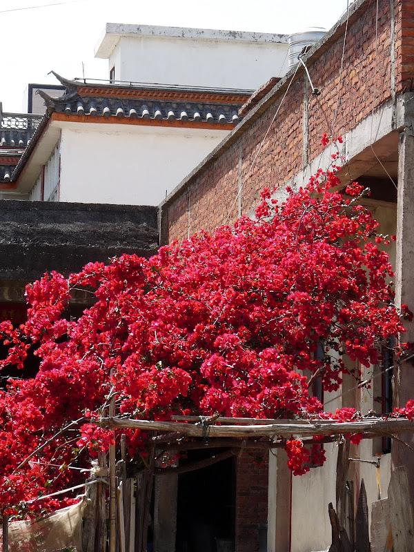 Chine. Yunnan Dali .En vélo vers le lac ERHAI - P1170750.JPG