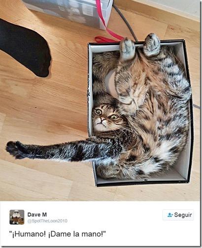 humor twits de gatos (8)