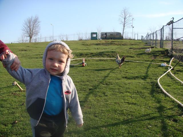 Polonezköy Legend Otel'in yeşil bahçesinde hayvanlar arasında dolaşırken