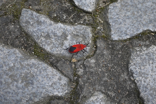 red bug on Guia Hill in Macau