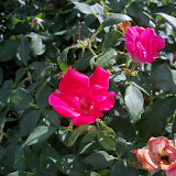 Gardening 2011 - 100_9996.JPG