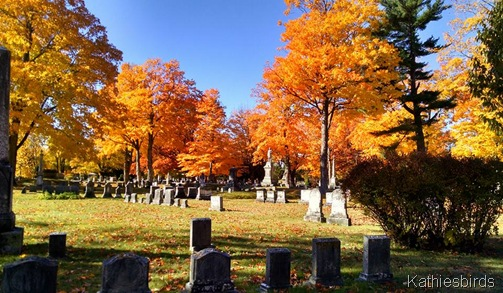 16. 10-26-15 the orange at evergreen cemetery