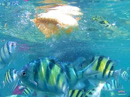 pulau harapan, 5-6 september 2015 skc 042