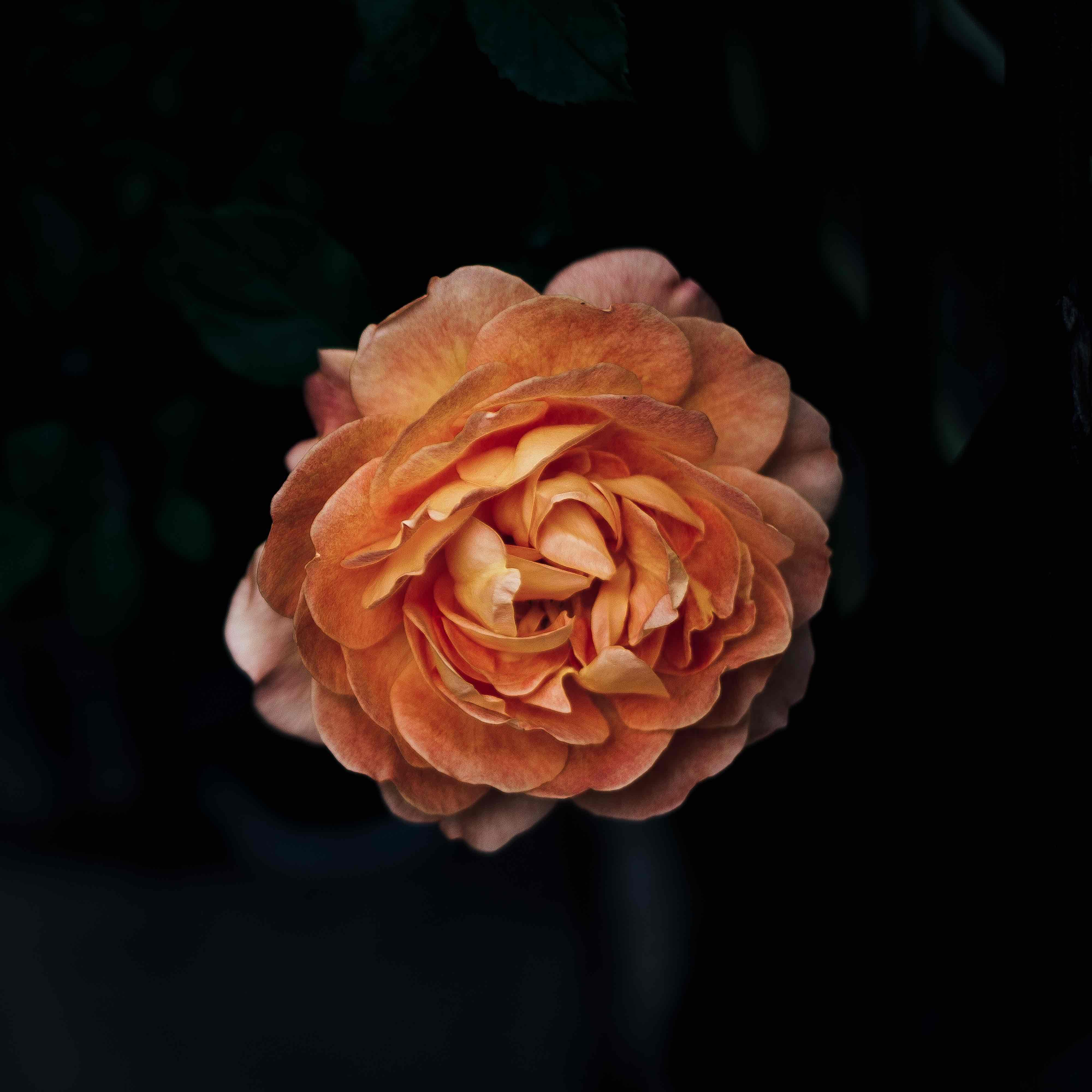 Imagenes muy lindas de flores2