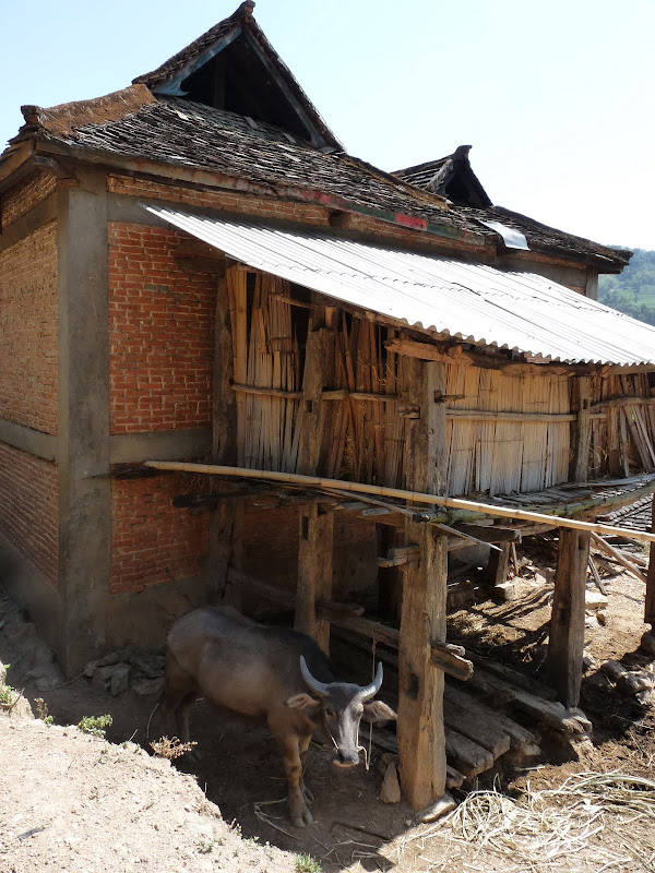 Chine: randonnée xishangbanna, région de Bada - Picture%2B813.jpg