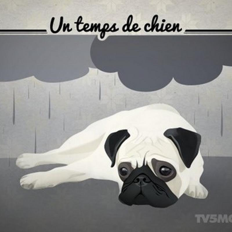 """Ungkapan: """"Un temps de chien"""""""