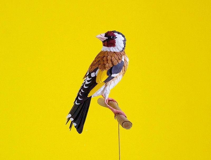 diana-beltran-herrera-birds-24