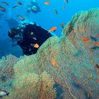 Great fan corals at Gabr el Bint