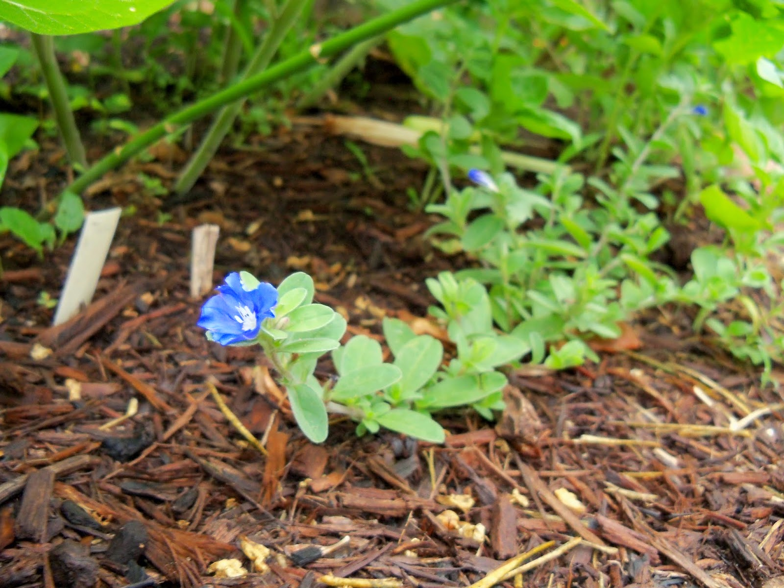 Gardening 2014 - 116_1848.JPG