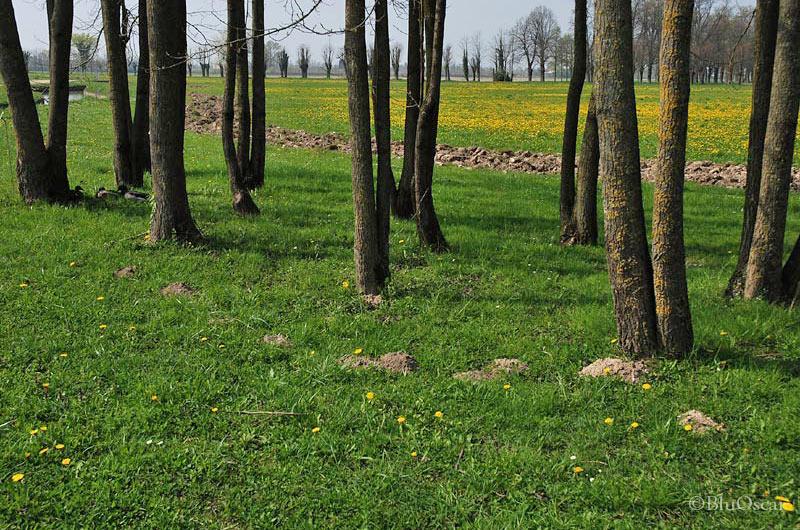 Villa Contarini 04