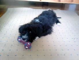 I naš mali Teddy javio nam se iz novog doma u kojem uživa već mjesec dana. A mi sretni :-)
