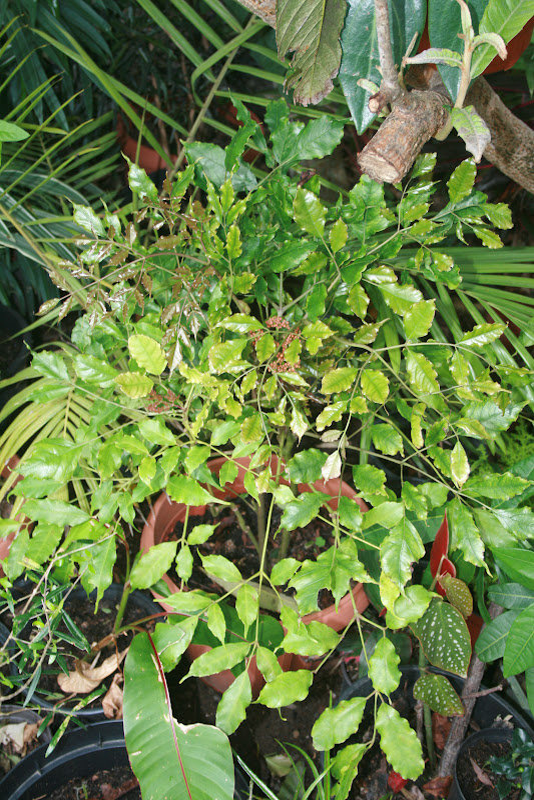 Futur jardin d'orchidées!!! IMG_3550