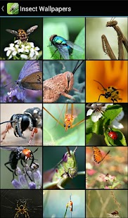 Insect Wallpapers - náhled