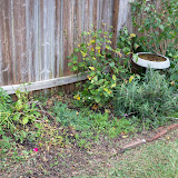Gardening 2013 - 115_5122.JPG