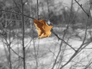Элдэв зураг /Photography by Bobby/