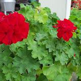 Gardening 2011 - 100_7396.JPG