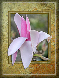 """Magnolia"" by Ardythe Wendt - 2nd Place Print A"