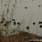 01-26-13 White Rock Lake - IMGP4313.JPG