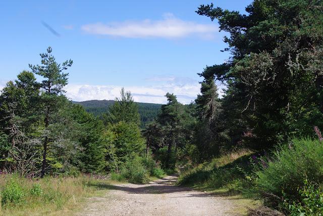 Biotope d'Erebia aethiops. Paulhac-en-Margeride, 1230 m (Lozère), 19 août 2013. Photo : J.-M. Gayman