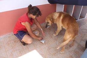 Other Ways we help - Sammy