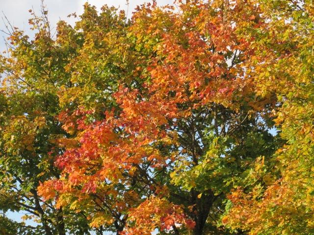 aalborg efterårsferie
