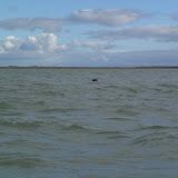 Kano Rijnland 2012 Zeekajakken Zeeland - 20121006%2BZeekajakken%2B%252817%2529.JPG