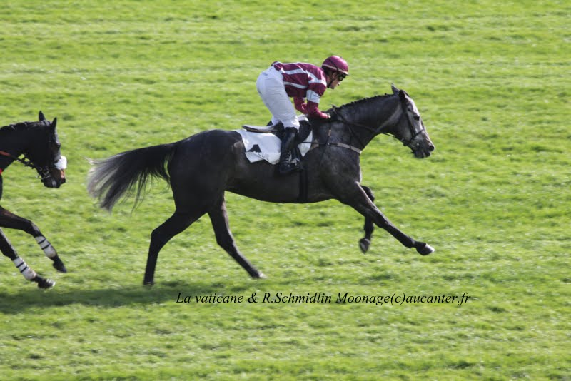 Photos Auteuil 2-11-2014 (48h de l'obstacle) IMG_5198