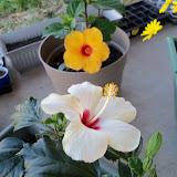 Gardening 2010 - 101_0485.JPG