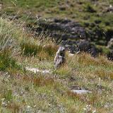 Marmotte et biotope de nombreux Colias. Bergerie supérieure de Mary (Maurin), 2400 m. 12 août 2009. Photo : J.-M. Gayman