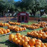 Pumpkin Patch 2014 - 116_4421.JPG