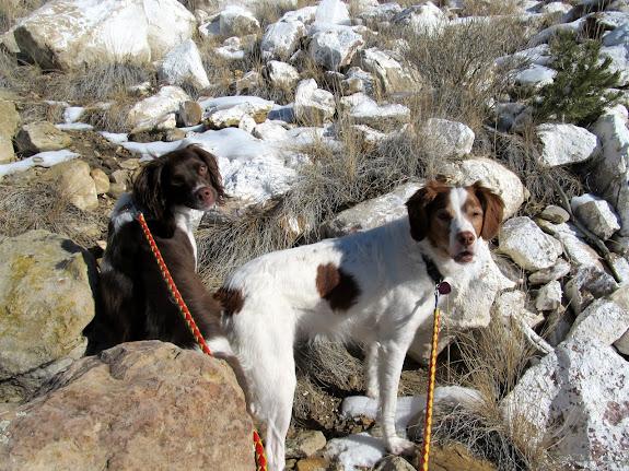 Boulder and Torrey