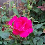 Gardening 2011 - 100_7187.JPG