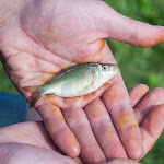 20160710_Fishing_Grushvytsia_017.jpg