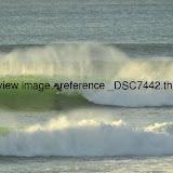 _DSC7442.thumb.jpg