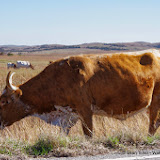 11-09-13 Wichita Mountains Wildlife Refuge - IMGP0397.JPG