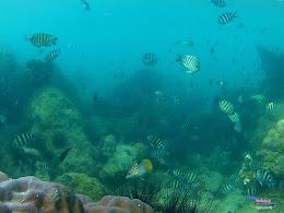 pulau pari 050516 GoPro 50